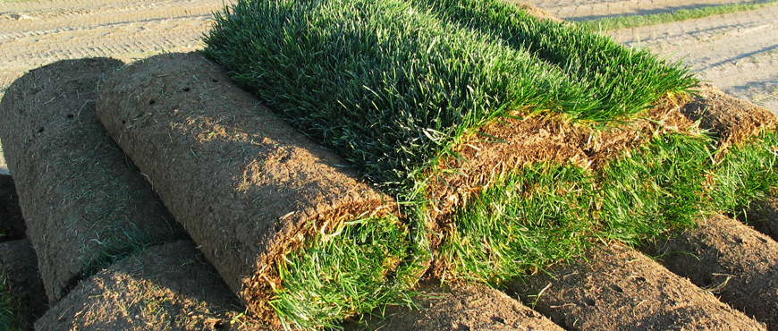 Sod installation in NH